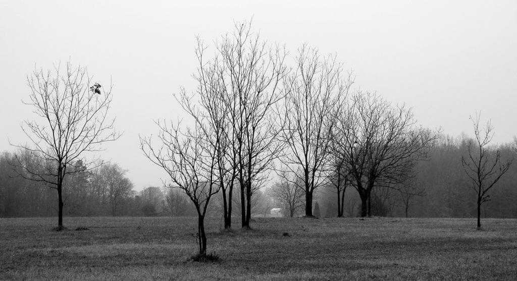 greenville winter