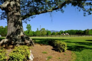 Greenville area horse farms for sale